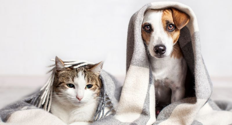 dog, cat, blanket, plaid, warm, cozy, winter, cold, autumn, cute, pet, happy, under, ill, bad weather, background, animal, sad, bed, home, puppy, funny, portrait, white, heating, fun, domestic, canine, animals, and, friendship, dog, cat, blanket, plaid, warm, cozy, winter, cold, autumn, cute, pet, happy, under, ill, bad weather, background, animal, sad, bed, home, puppy, funny, portrait, white, heating, fun, domestic, canine, animals, and, friendship