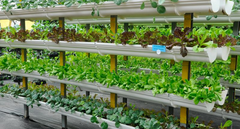 vegetable, grown, fertigation, system, plant, small, space, vertical, soil, water, mix, fertilizer, supply, drip, supplier, irrigation, farm, technology, agriculture, sprinkler, pivot, farming, garden, pipe, green, background, food, equipment, organic, industry, crop, ecology, irrigate, grow, gardening, field, agribusiness, malaysia, modern, nature, farmer, healthy, natural, fresh, tree, eat, stack, height, plastic, pot