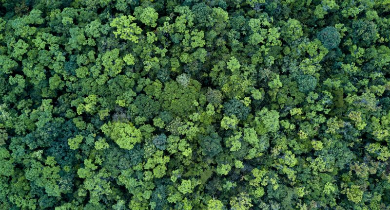 above, abstract, aerial view, area, atmosphere, background, beautiful, branches, discover, eco, ecology, environment, evergreen, flora, foliage, forest, forestry, fresh, green, high, hill, land, landscape, leaf, mountain, national, natural, nature, outdoor, park, pattern, photography, plant, rural, scenery, scenic, season, spruce, surface, texture, top view, travel, tree, trees, wallpaper, wild, wilderness, wood, woodland, woods, above, abstract, aerial view, area, atmosphere, background, beautiful, branches, discover, eco, ecology, environment, evergreen, flora, foliage, forest, forestry, fresh, green, high, hill, land, landscape, leaf, mountain, national, natural, nature, outdoor, park, pattern, photography, plant, rural, scenery, scenic, season, spruce, surface, texture, top view, travel, tree, trees, wallpaper, wild, wilderness, wood, woodland, woods