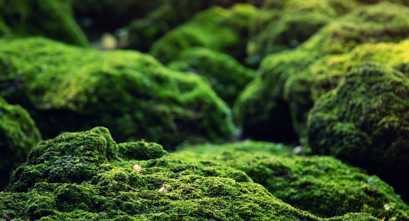 moss, green, wall, texture, background, nature, jungle, beautiful, forest, grass, lichen, closeup, natural, close, surface, plant, fresh, leaf, growth, stone, wet, macro, textured, abstract, pattern, ground, reindeer, spring, outdoor, color, up, flora, decoration, floor, grow, wallpaper, rock, rangiferina, garden, park, environment, mossy, tree, landscape, summer, waterfall, stream, outdoors, river, field
